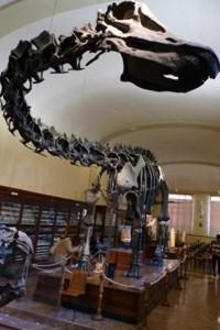 Museo di geologia a Bologna